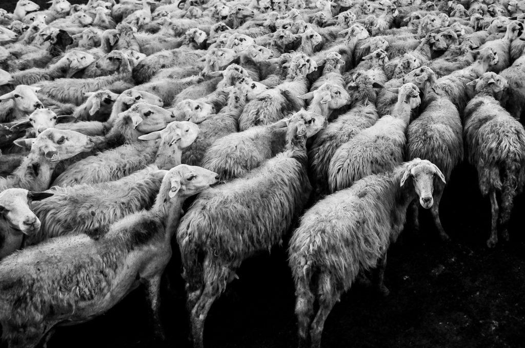 98-Monsieur Mouton